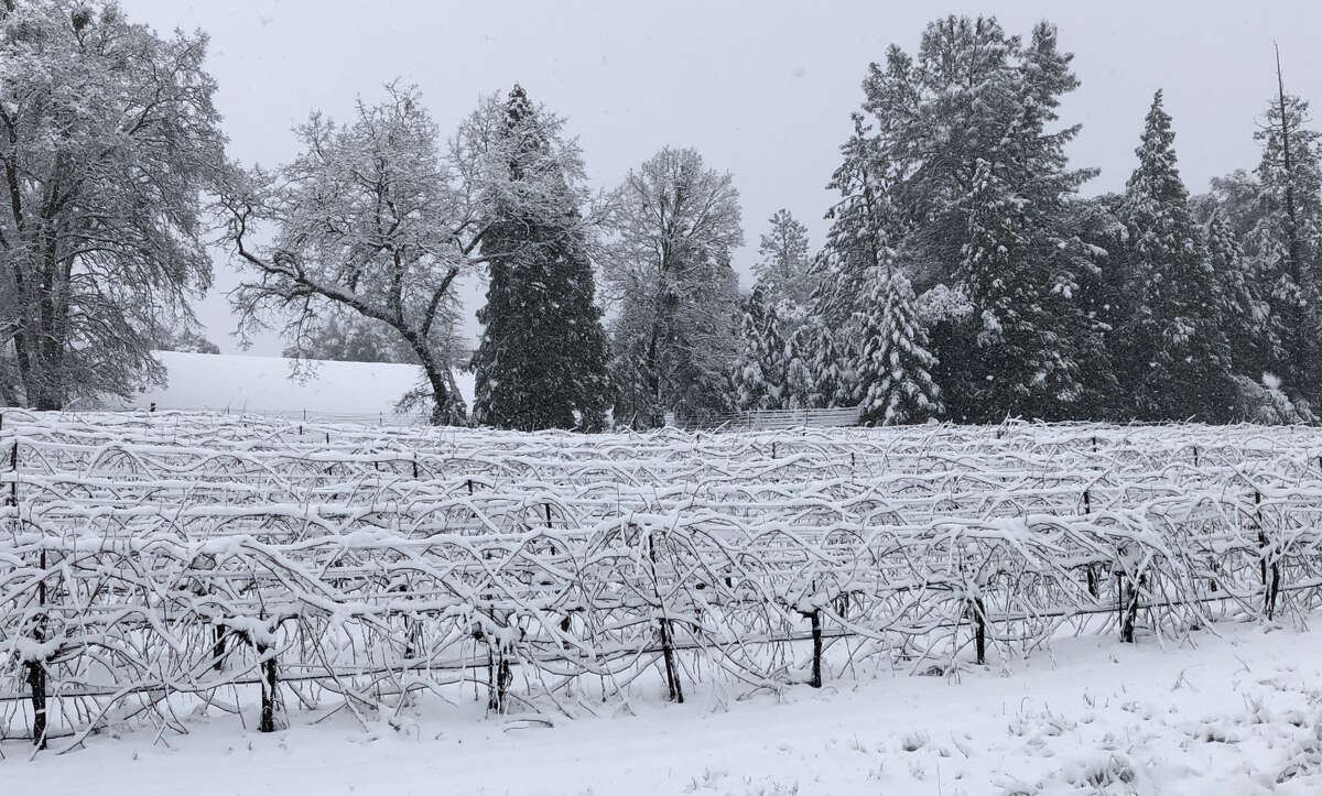 The snowy winter of 2019 as seen at Cedarville Vineyard in Fair Play (El Dorado County).