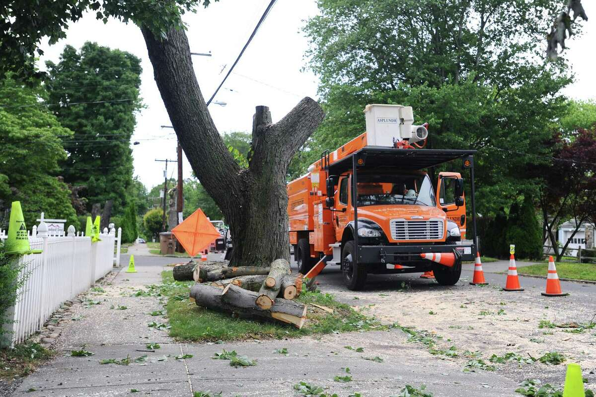 Remnants of a tree sit on Lenox Ave. after they were removed by Eversource employees on Tuesday, June 28, 2016. The trees were marked by Eversource months ago for removal, and after approval from the city of Stamford were removed.