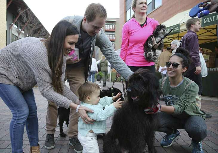 """John (second from left) and Heidi McDonald help their 13-month-old daughter, Lyla, meet some canine pets at the farmers market at The Pearl on Saturday, Jan. 26, 2019. The typical """"Austin personality"""" simply wasn't to John's liking; her prefers the laid-back vibe of San Antonio. (Kin Man Hui/San Antonio Express-News)"""
