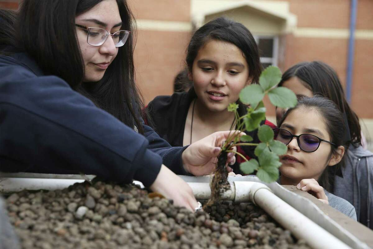 South San High School senior Alyssa Munoz (left) helps Price Elementary students Abigail Gonzales (right) and Ashley Vasquez place a plant into a aquaponic garden on March 6, 2019. Students at Price Elementary are learning the United Nations' 17 sustainable development goals. The campus-wide initiative expands on what was started by the student World Changers Club, led by counselor Ida Villavicencio. She's hoping to get corporate partners involved to support the school, and to spread it throughout the district.