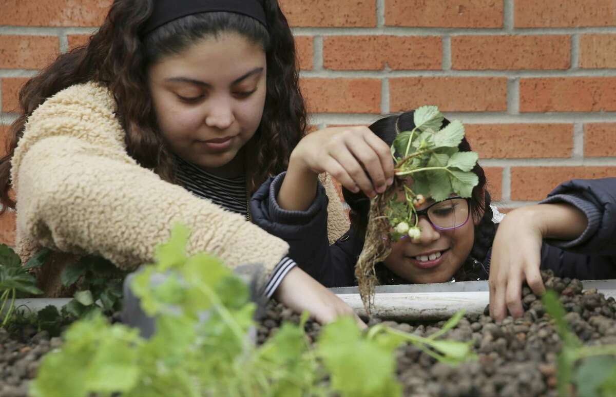 Price Elementary third-grader Eliasib Hernandez (right) gets help with planting in a hydroponic garden from South San High School senior Isabela Perez on March 6, 2019. Students at Price are learning the United Nations' 17 sustainable development goals.