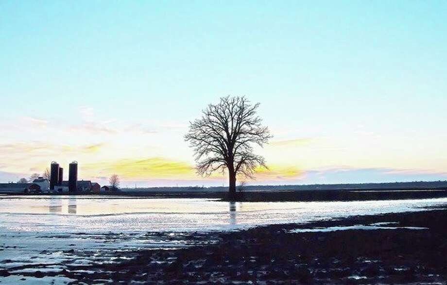 A lone tree stands in an ice-covered field at sunset, near Caseville, on a recent evening. (Bill Diller/For the Tribune)