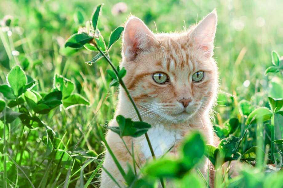 Pet owners who are not sure should be aware of which plants to avoid for the safety of their pets. Photo: Texas A&M University
