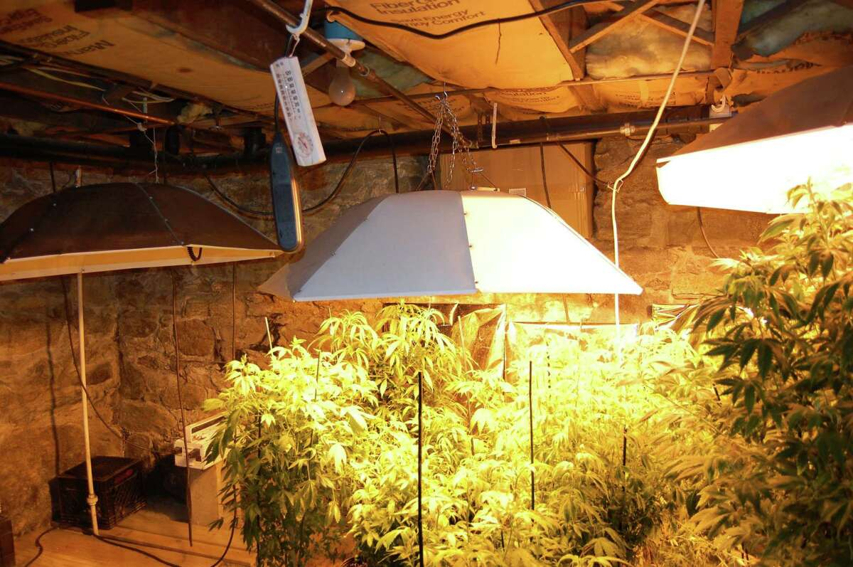 Marijuana plants confiscated by the Ansonia Police Department in a 2008 drug raid. Under bills pending in the General Assembly, people arrested for possessing an ounce-and-a-half or less, could have their criminal records expunged.