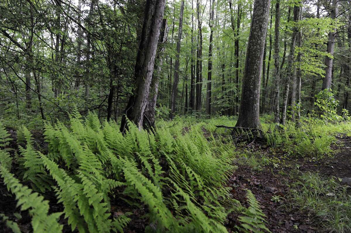 File photo of Weantinoge Heritage Land Trust's preserve next to the donated land on Squash Hollow Road. Photo Tuesday, June 6, 2017.