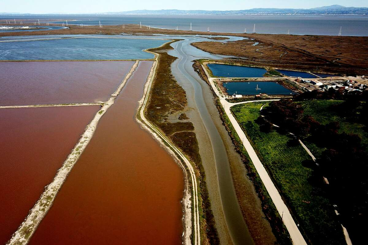 A sprawling collection of Redwood City salt ponds, owned by Cargill Inc., protected under the Clean Water Act, a 1972 law.
