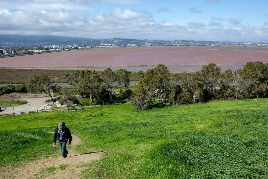 The pinkish-red salt ponds that are part of a significant stretch of wetlands are seen from Bedwell Bayfront Park in Menlo Park. Photo: Santiago Mejia / The Chronicle