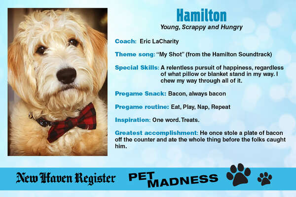 Meet the competitors vying to be pet champion in our New Haven Pet Madness contest, kicking off March 18, 2019. Want to vote for your favorite? Visit www.nhregister.com/petmadness to find voting rounds, brackets, results and more.