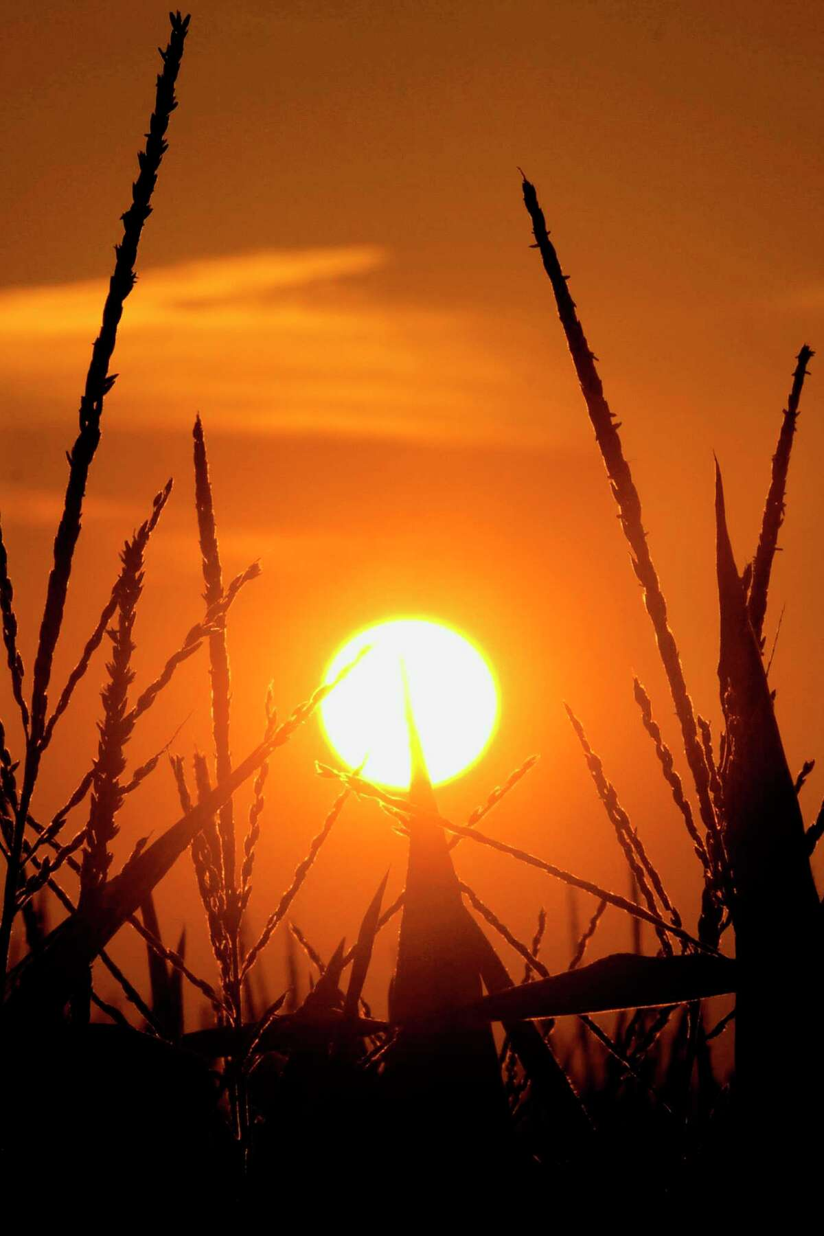 ADVANCE FOR USE TUESDAY, MARCH 19, 2019 AND THEREAFTER-FILE - In this July 15, 2012 file photo, the sun rises over corn stalks in Pleasant Plains, Ill., during a drought. An AP data analysis of records from 1999-2019 shows that in weather stations across America, hot records are being set twice as often as cold ones.