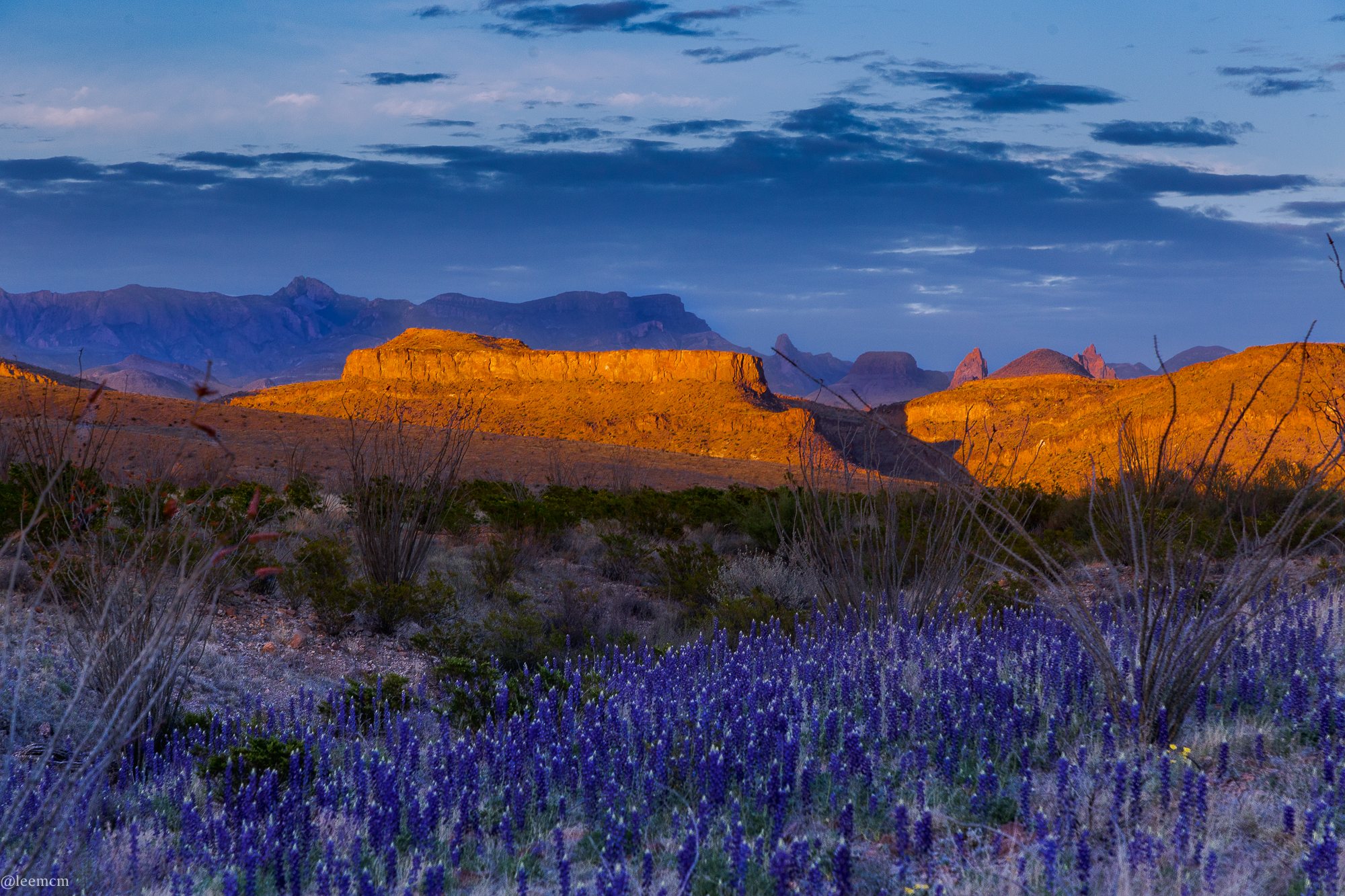 Big Bend photographer captures the beauty of largest ...