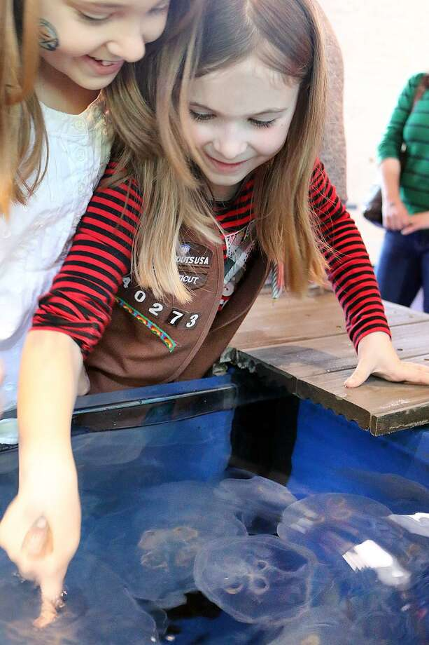 The Maritime Aquarium at Norwalk is discounting admission for Girl and Boy Scouts at its annual Scout Day March 23. Photo: Maritime Aquarium At Norwalk / Contributed Photo