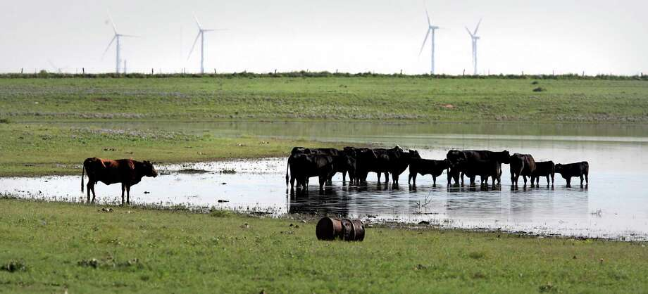 The Panhandle is the nation's top producer of beef. A new school would help meet its need for veterinarians. Photo: Bob Owen /Staff File Photo / © 2012 San Antonio Express-News
