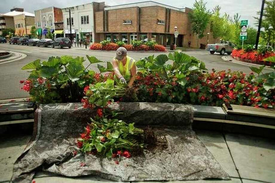 Marcia Balcirak with the City of Midland works to remove plants at the corner of Main and McDonald on Tuesday, Sept. 25, 2018. (Katy Kildee/kkildee@mdn.net)