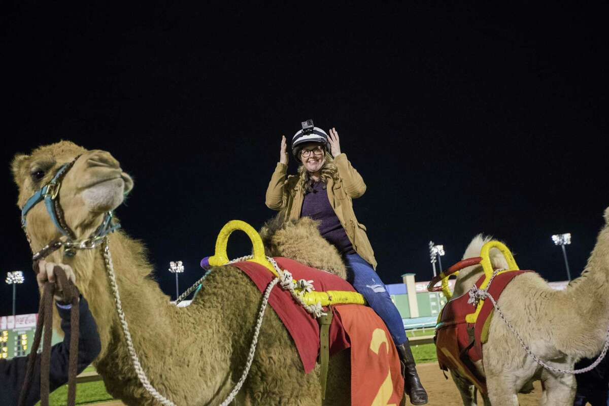Houston Chronicle reporter Maggie Gordon makes sure she's ready to race a camel at Sam Houston Race Park.
