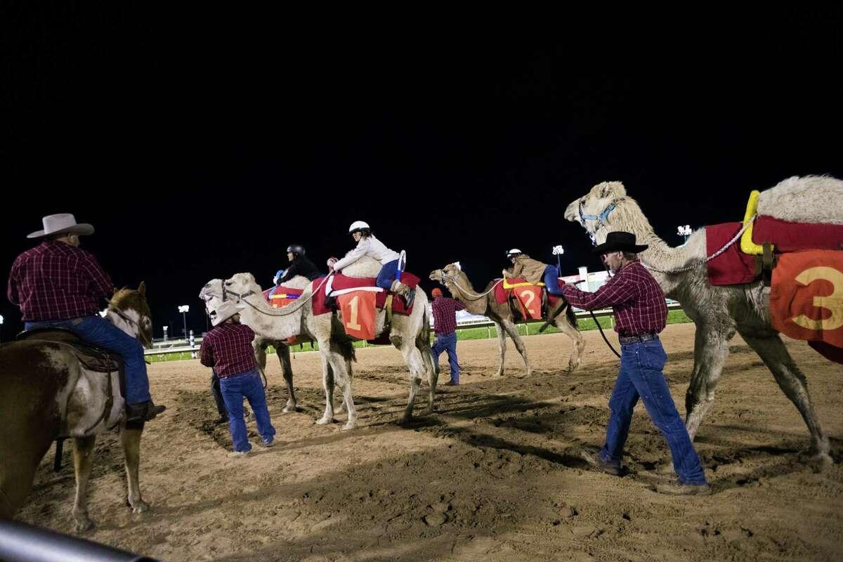 Maggie Gordon returns after racing a camel at Sam Houston Race Park.