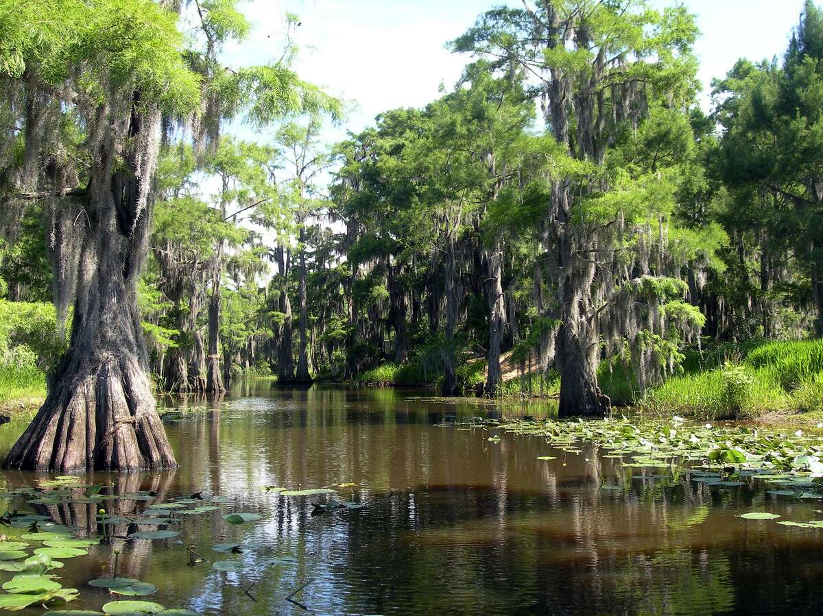 Bald cypress trees, Spanish moss and murky water characterize the scene at Caddo Lake State Park.