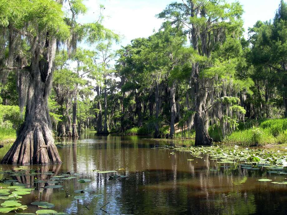 Bald cypress trees, Spanish moss and murky water characterize the scene at Caddo Lake State Park. Photo: Eileen McClelland / Houston Chronicle / Houston Chronicle