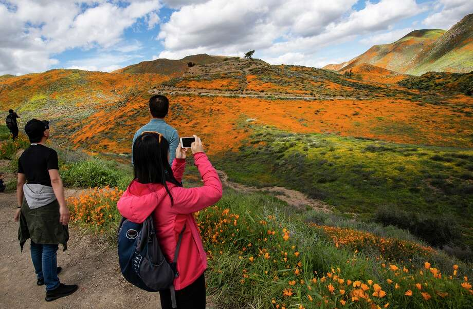 Visitors admire the super bloom, which has turned the hillsides into a sea of orange poppies in Walker Canyon in Lake Elsinore, Calif., on March 9, 2019. Photo: Gina Ferazzi/TNS