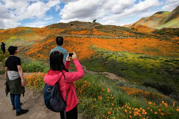 Visitors admire the super bloom, which has turned the hillsides into a sea of orange poppies in Walker Canyon in Lake Elsinore, Calif., on March 9, 2019. (Gina Ferazzi/Los Angeles Times/TNS)