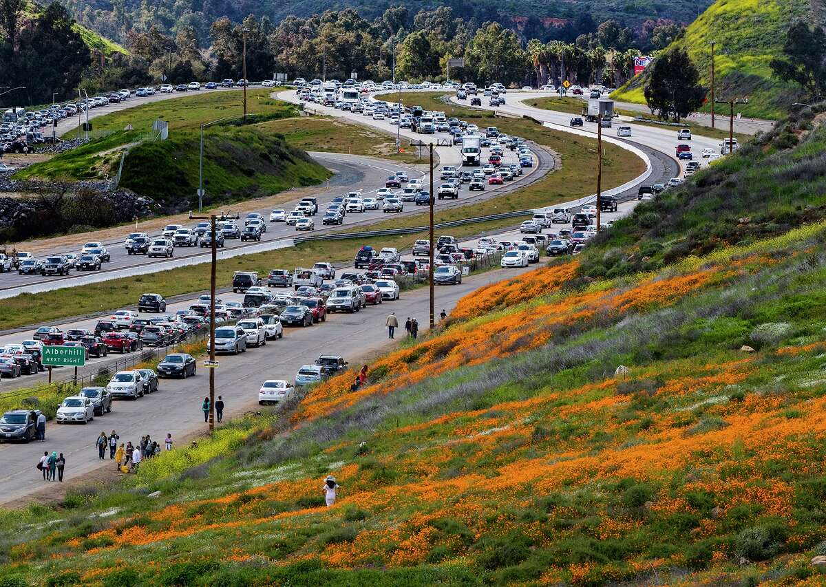The super bloom creates a super traffic jam along the 15 Freeway as wildflower enthusiasts wait to exit toward Walker Canyon to get a close up of the flowers on the hillsides on March 9, 2019, in Lake Elsinore, Calif. (Gina Ferazzi/Los Angeles Times/TNS)