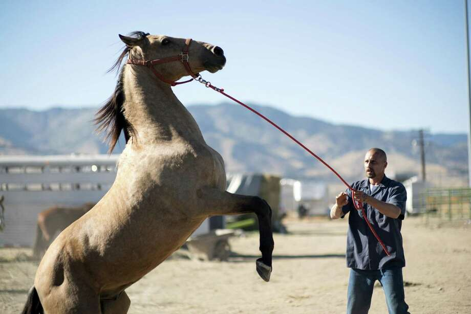 """This image released by Focus Features shows Matthias Schoenaerts in a scene from """"The Mustang."""" (Tara Violet Niami/Focus Features via AP) Photo: Tara Violet Niami, HONS / Associated Press / © Focus Features"""