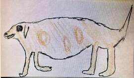 Coyote as seen in Tamalpais Valley