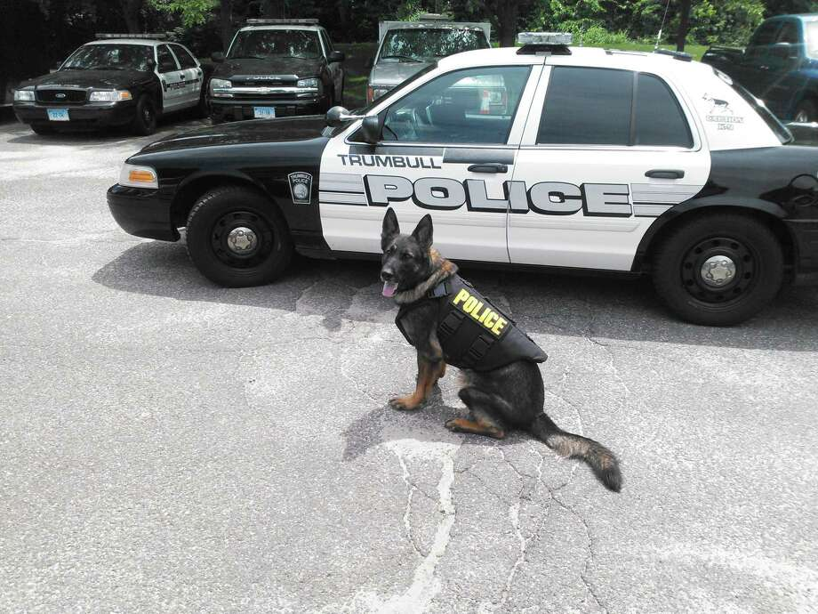Trumbull police dog wears a vest Photo: Contributed Photo / Contributed Photo / Connecticut Post Contributed