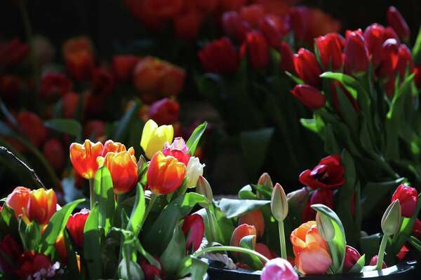 Spring flowers brighten Pike Place, as temperatures reached 79 degrees, the warmest March day in Seattle on record, Mar. 19, 2019.