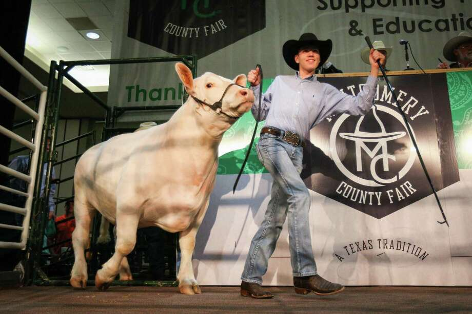 Montgomery FFA's Colton Carwile shows his grand champion steer during the Montgomery County Fair Junior Livestock Auction on Wednesday, April 18, 2018, at the Lone Star Convention Center. Photo: Michael Minasi, Staff Photographer / Houston Chronicle / © 2018 Houston Chronicle