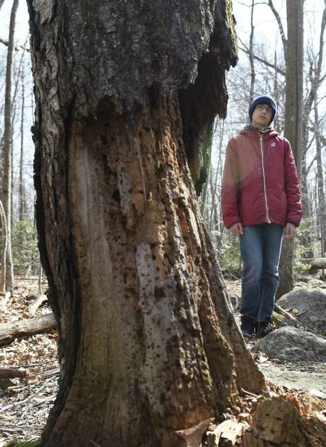 Fiorenzo Tiberi, 13, a former resident of Old Greenwich, looks at the base of a nearly dead tree while hiking on the Greenwich Land Trust first day of spring walk at the Babcock Preserve in Greenwich, Conn. Wednesday, March 20, 2019. Led by Greenwich Land Trust's Dean Fausel, hikers observed activity in the preserve's vernal pools and early signs of spring with blooming plants and the first leaves of the season. The Babcock Preserve is a vast 300-acre forest maintained as a natural conservation area that includes a huge variety of plant and animal life. Photo: Tyler Sizemore / Hearst Connecticut Media / Greenwich Time