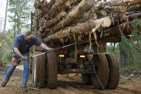 Logger Joey Teer cleans up a load of southern yellow pine logs he is harvesting on a tree farm northwest of Lufkin, TX before they are hauled away, Monday, Feb. 25, 2019.