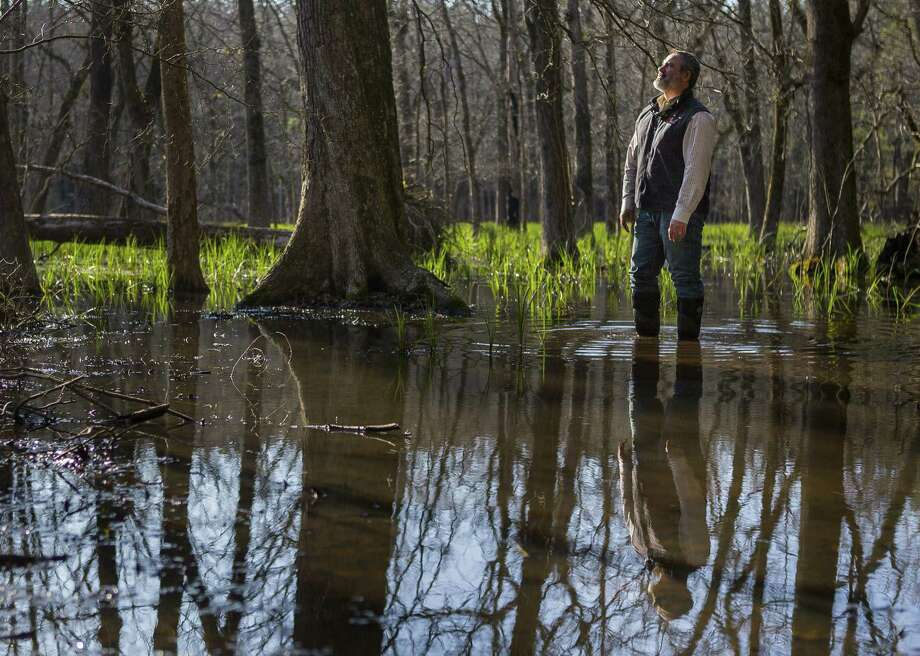 Rob Hughes, executive director of the Texas Forestry Association, wades through a slough in a group of hardwood trees on a tree farm northwest of Lufkin, TX, Monday, Feb. 25, 2019. Hughes started his career as a hardwood forester. Photo: Mark Mulligan,  Staff Photographer / © 2019 Mark Mulligan / Houston Chronicle