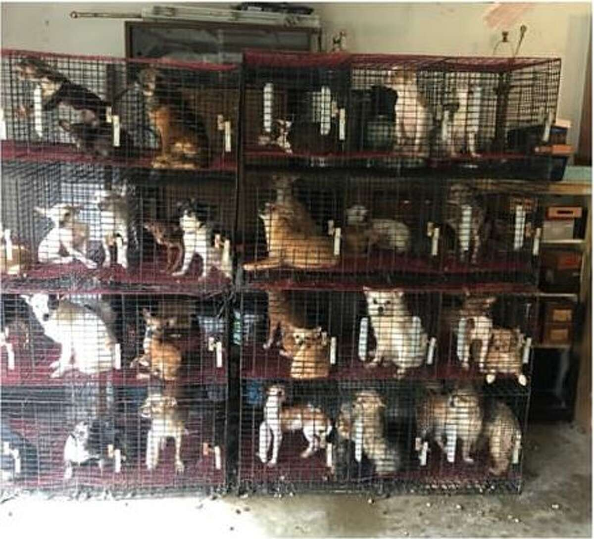 Officials rescued 76 dogs, 46 of which were puppies, from a property in Needville Thursday.