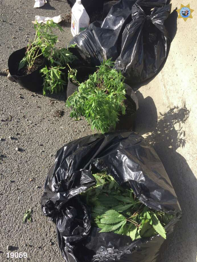A driver was cited after spilling garbage bags of marijuana along an Oakland freeway. Photo: CHP Oakland/Twitter