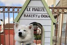 10 A.M. It's only fair that your furry friend gets pastry, too. Walk about two miles south to the Marina district, and grab a Muddy Paw-applesauce cake enrobed in dark carob-at Le Marcel Bakery for Dogs.