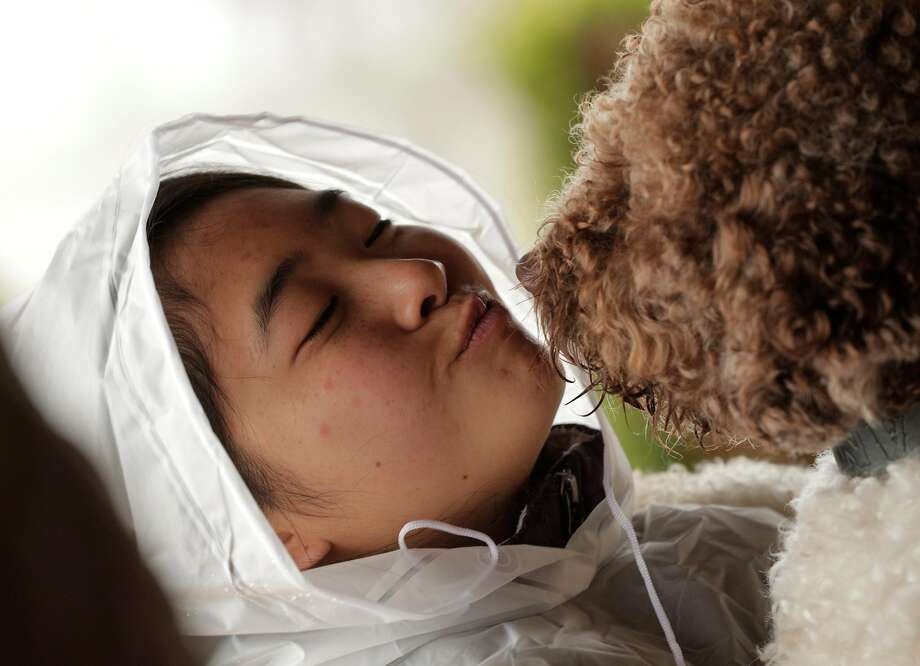 Leeza Kuo kisses her dog, Tango, during a training session for dogs learning to sniff out truffles in Placerville. The Truffle Dog Company trains dogs, primarily the Lagotto Romagnolo breed, to sniff out truffles with a training session at the truffle orchard of Staci O'Toole. Photo: Carlos Avila Gonzalez / The Chronicle