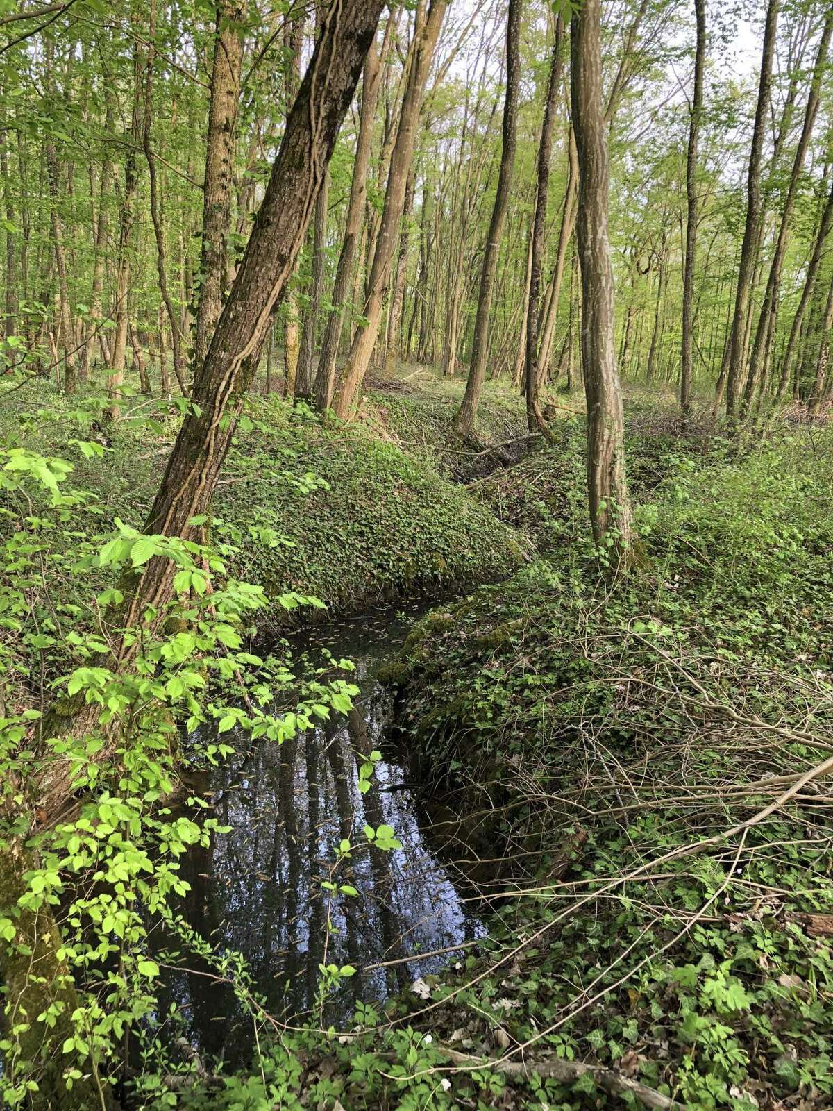 Photos of former trench areas in France, accompanied by photos of American soldiers in those same trenches during World War I, are part of a history project that 15 Connecticut students are taking part in this year.