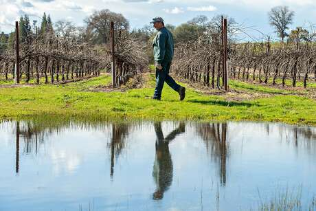 Brad Goehring at his vineyard on Wednesday, Feb. 20, 2019, in Clements, Calif. A proposed state wetlands regulation may put a limitation on farmers like Goerhring. The state policy comes as President Trump seeks to scale back wetlands protections under the Clean Water Act.