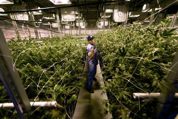 David Lipton, managing partner of Advanced Grow Labs, a medical marijuana production facility in West Haven, Connecticut, in a flower room at the plant in 2015.