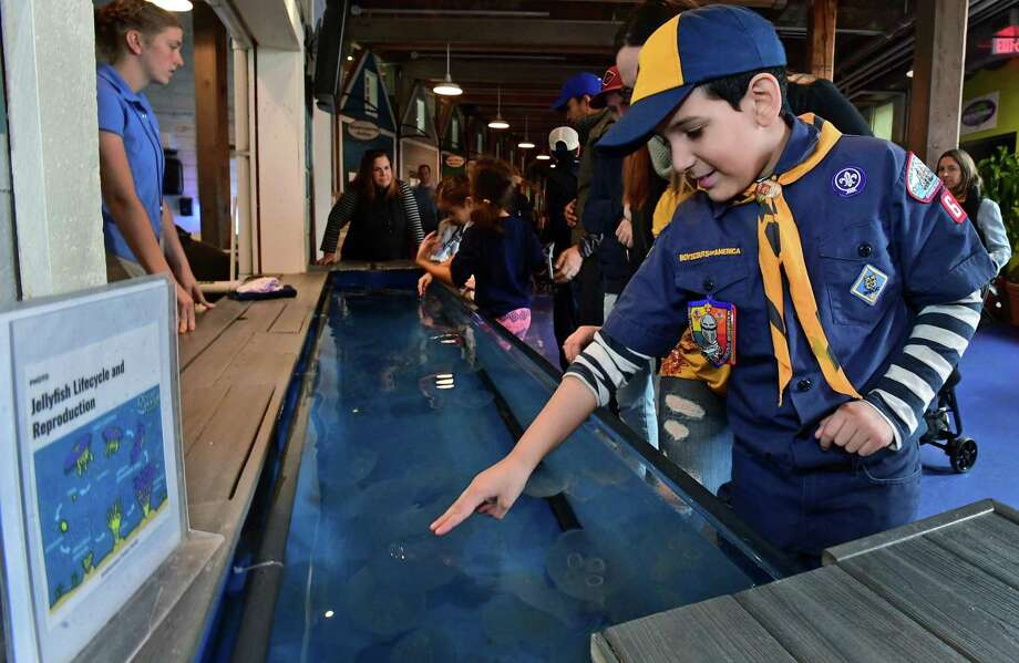 Above, Norwalk Cub Scout with Pack 61 Jacob Palacios checks out the exhibits during Scout Day at The Maritime Aquarium on Saturday in Norwalk. Scouts BSA (boys and girls) and Girl Scouts attended special educational programs that help to fulfill badge requirements. Numerous units from the region took advantage of hands-on learning opportunities. Photo: Erik Trautmann / Hearst Connecticut Media / Norwalk Hour