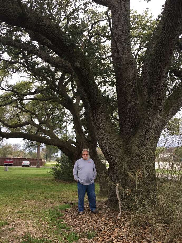 In March 2019, Robert Fontenot stands in front of Live oak trees that he said were planted in the early 1900s at the founding of the Roesner Homestead. His attempts to protect them from removal were unsuccessful. The North Fort Bend Water Authority went to court and successfully obtained a condemnation of a 20-foot wide section of his land at 24515 Roesner Road in which to place a water line. Photo: Karen Zurawski / Karen Zurawski