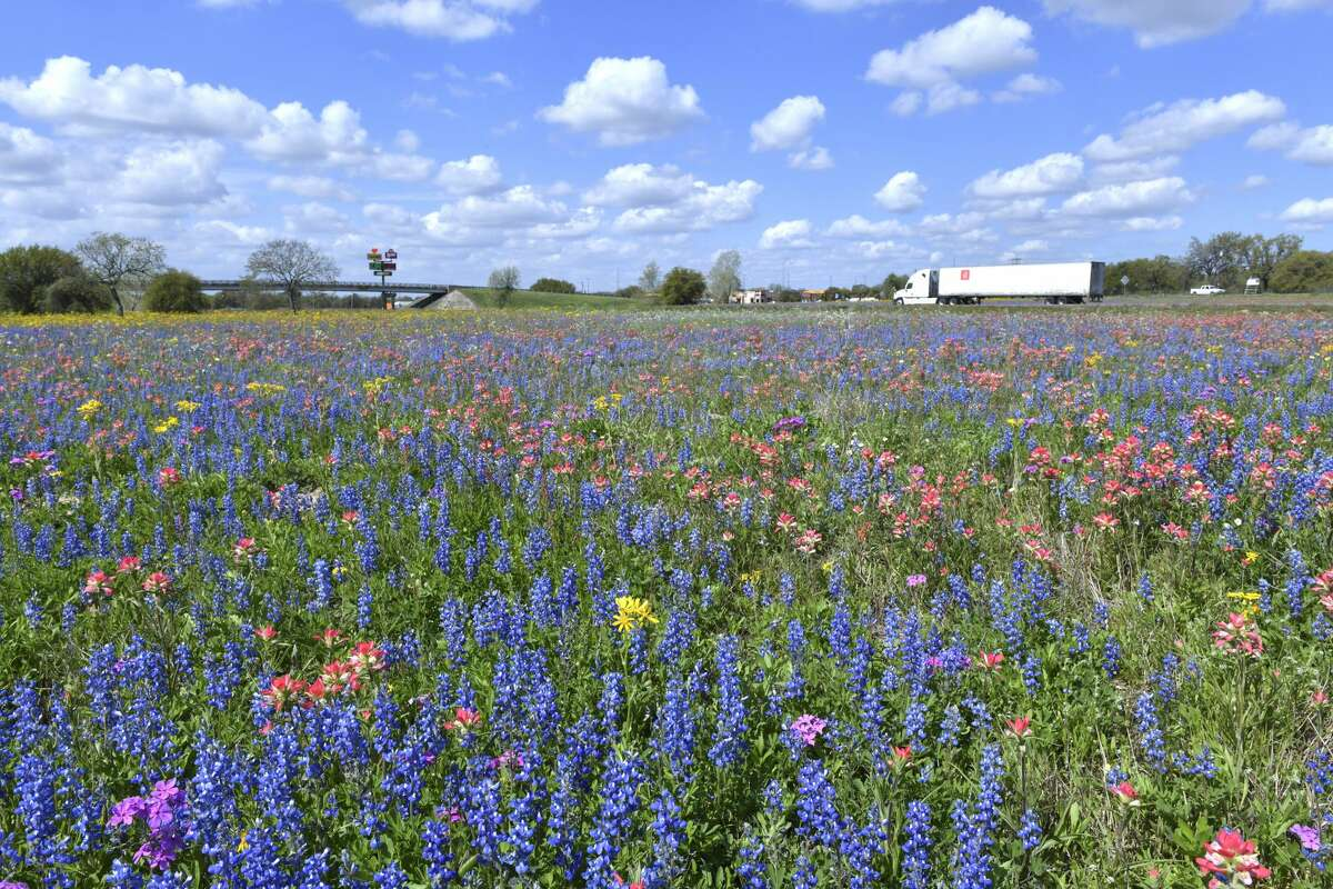 Bluebonnets and other wildflowers grow in the countryside off of Interstate 35 near Devine on Tuesday, March 19, 2019.