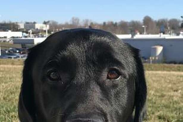 Fitz, who has been specially trained for two years to become a facility dog, was welcomed to the Madison County Courthouse Monday.