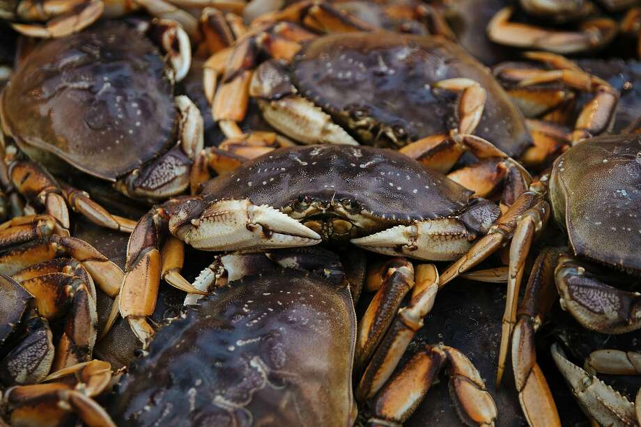 """Dungeness crab are seen in the back of Aaron Lloyd's ship, """"The Offshore"""" at Pier 45 in San Francisco, Calif. Wednesday, November 15, 2017. Photo: Mason Trinca / Special To The Chronicle"""