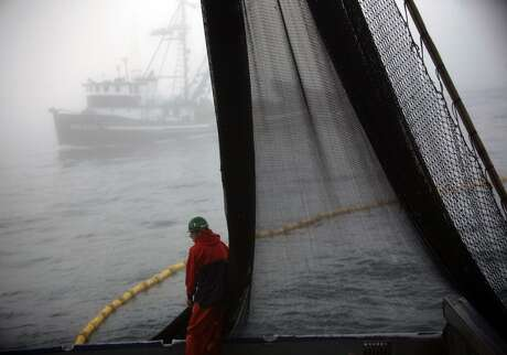 Deckhand Seth Adler gathers fishing net as another squid fishing boate materailizes in the fog as Captain Nick Jurlin and his five man crew make the round trip from San Pedro to the west side of Catalina Island on the Cape Blanco to join around 10 other fishing boats at a spot where they know they can find squid on OCTOBER 10, 2011. Jurlin says a bill moving its way through the California legislature, which would further protect sardines, anchovies, herring and market squid would cripple the San Pedro fishing fleet.