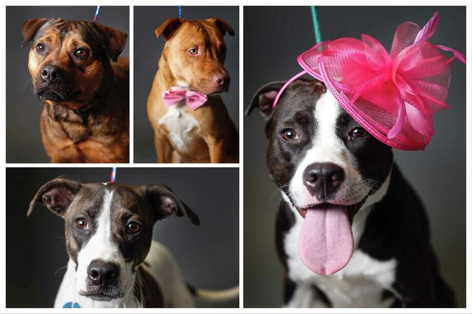 Pets Of The Week Harris County Animal Shelter Rescues Dumped