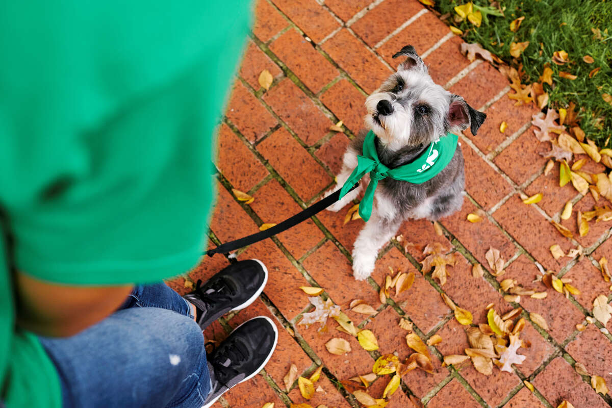 Rover.com has launched on-demand pet walking services in Houston.