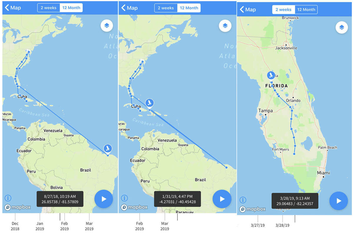 An osprey named Holly tracked through the Animal Tracker app as it makes its way north this spring. Holly showed up in Florida on March 26 after being recorded via the tracker on the northeast coast of Brazil Jan. 30. The app allows the public to follow the movements of animals being tracked using live feeds in Movebank. Users can animate recent movements, view information about the research project and individual animals, and contribute images of the animals or their habitat. The app also can be used to privately share non-public data, intended to help researchers in the field.