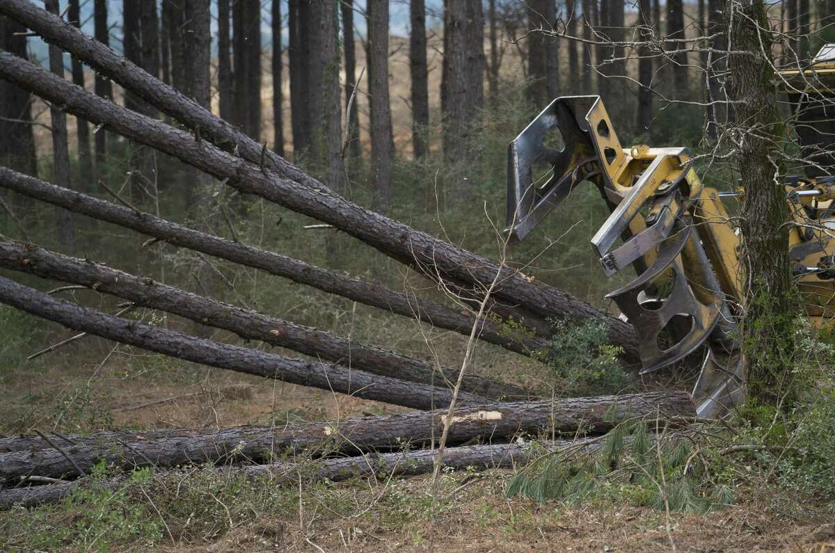 As industry booms, southern state governments must ensure that forests are managed sustainably.
