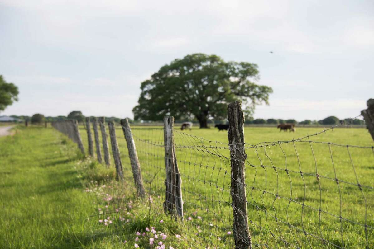 Wide-open spaces, such as this one on Spread Oaks Ranch, are protected forever thanks to conservation-minded landowners like Forrest Wylie, the 2019 honoree for Katy Prairie Conservancy's Bash,